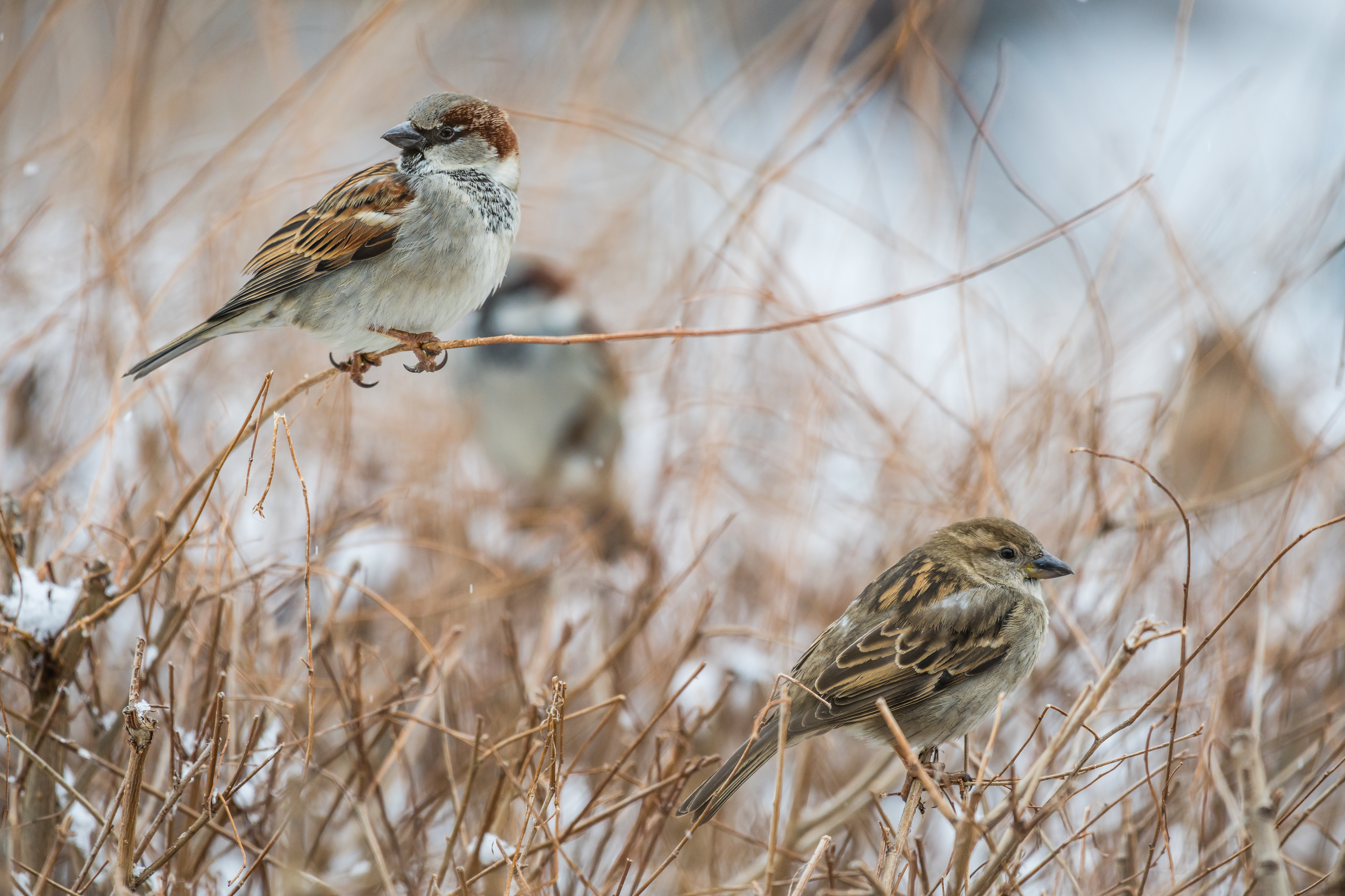 Birds In Grass